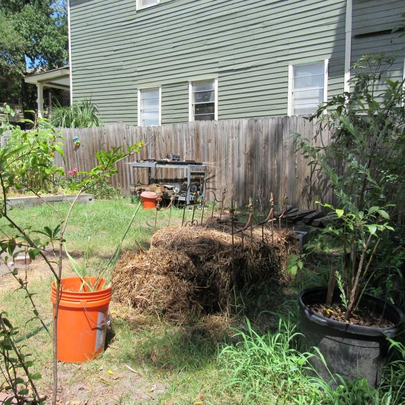 Garden hay