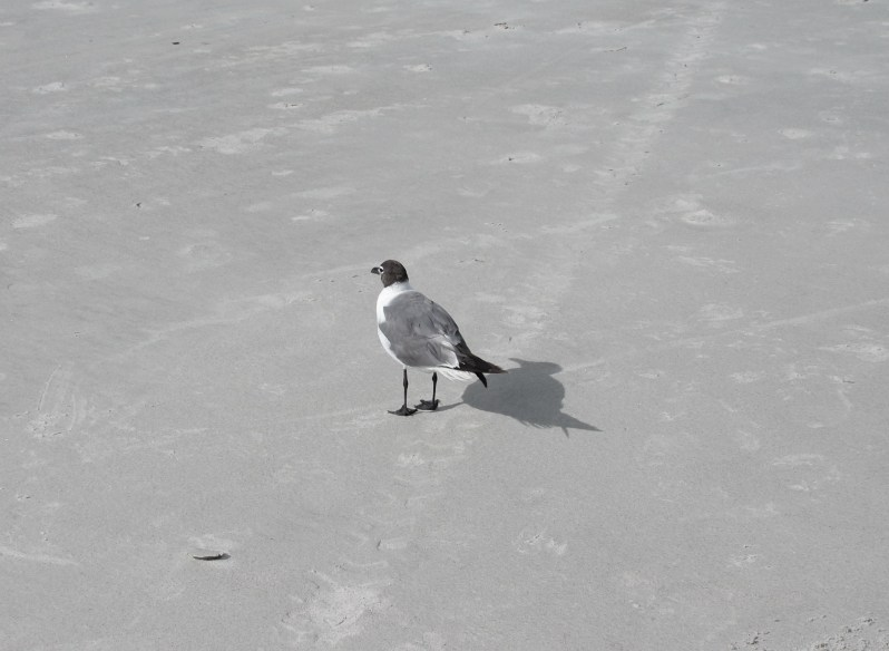 Seagull shadow