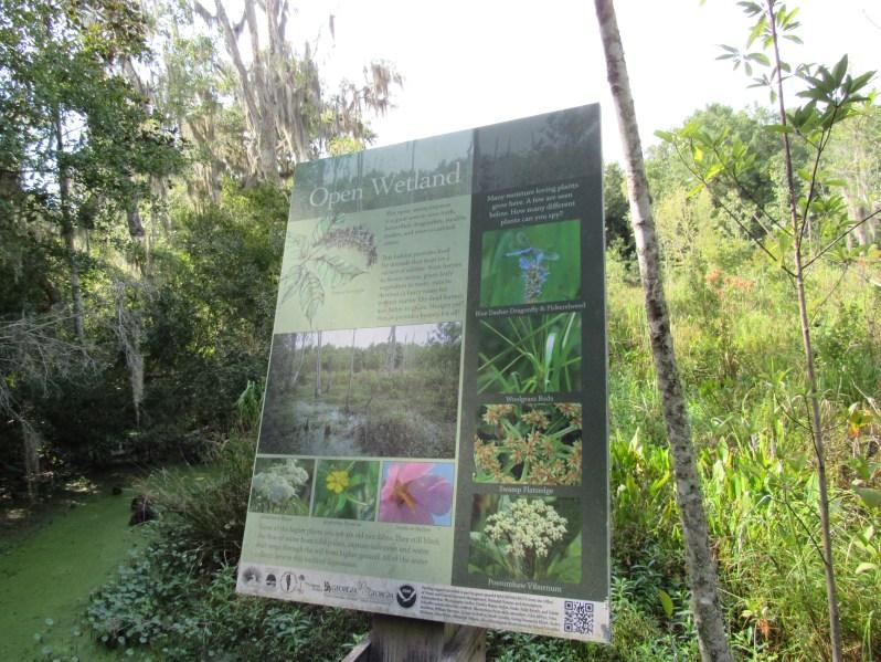 Open Wetland