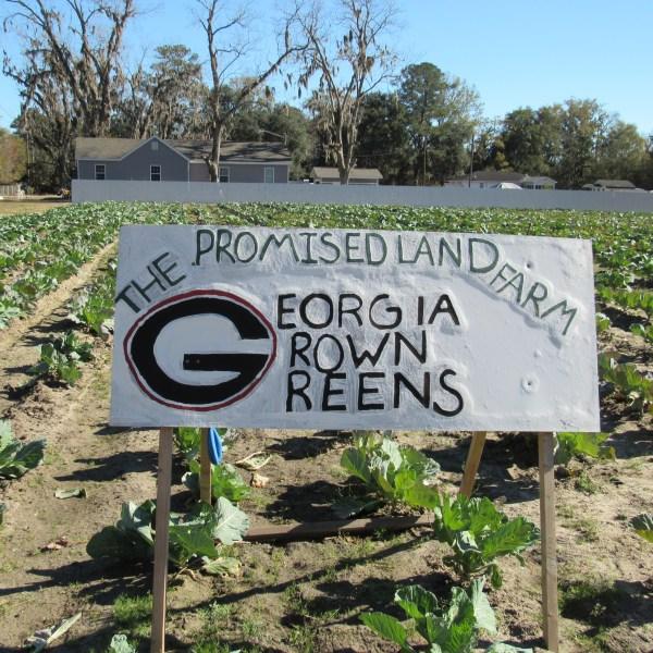 Georgia grown greens