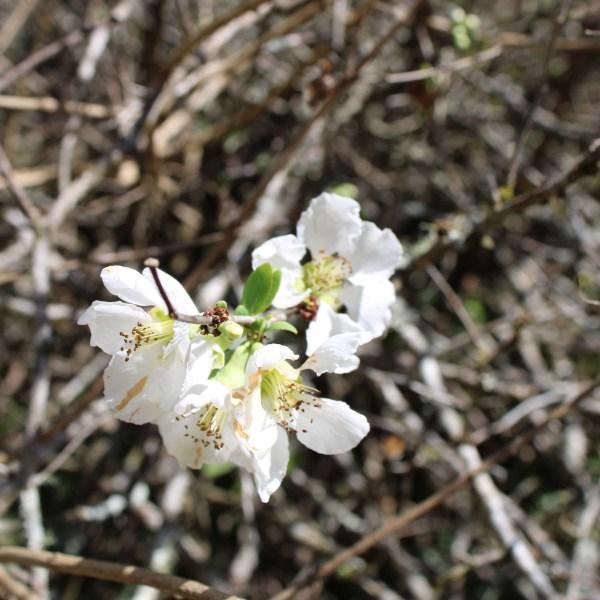 Flower on the vine