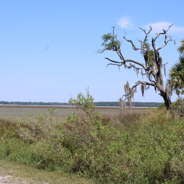 Broad Creek marshland