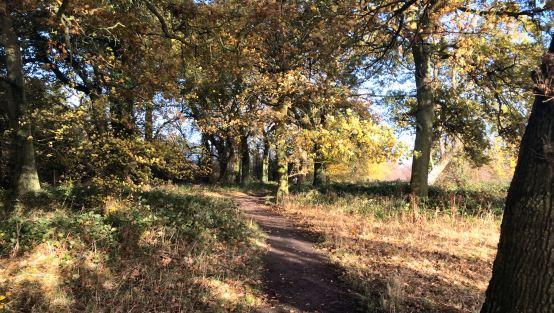 Harcourt Hill parkrun