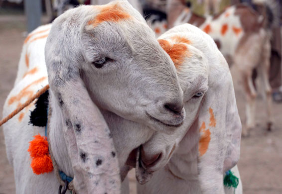 Eidul Azha is an opportunity of great economic activity.