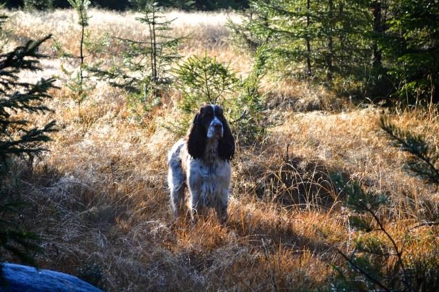 thea_skogen3