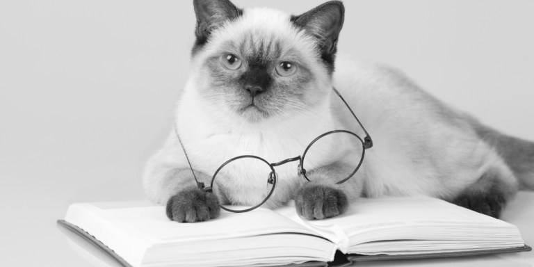 Cat with glasses lying on an open book