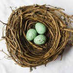 Nesting is the best way to start your next speech