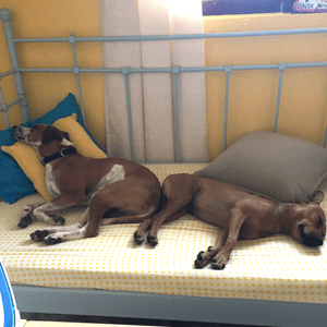 dogs-on-the-bed
