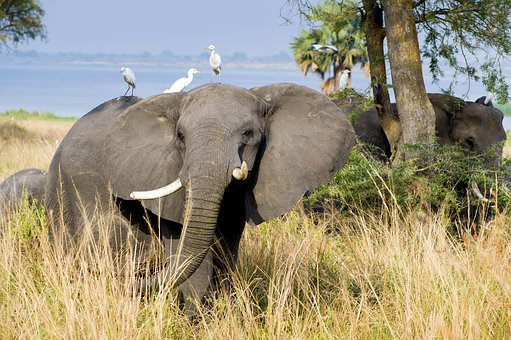 10 Best African Countries to visit for an ultimate African safari