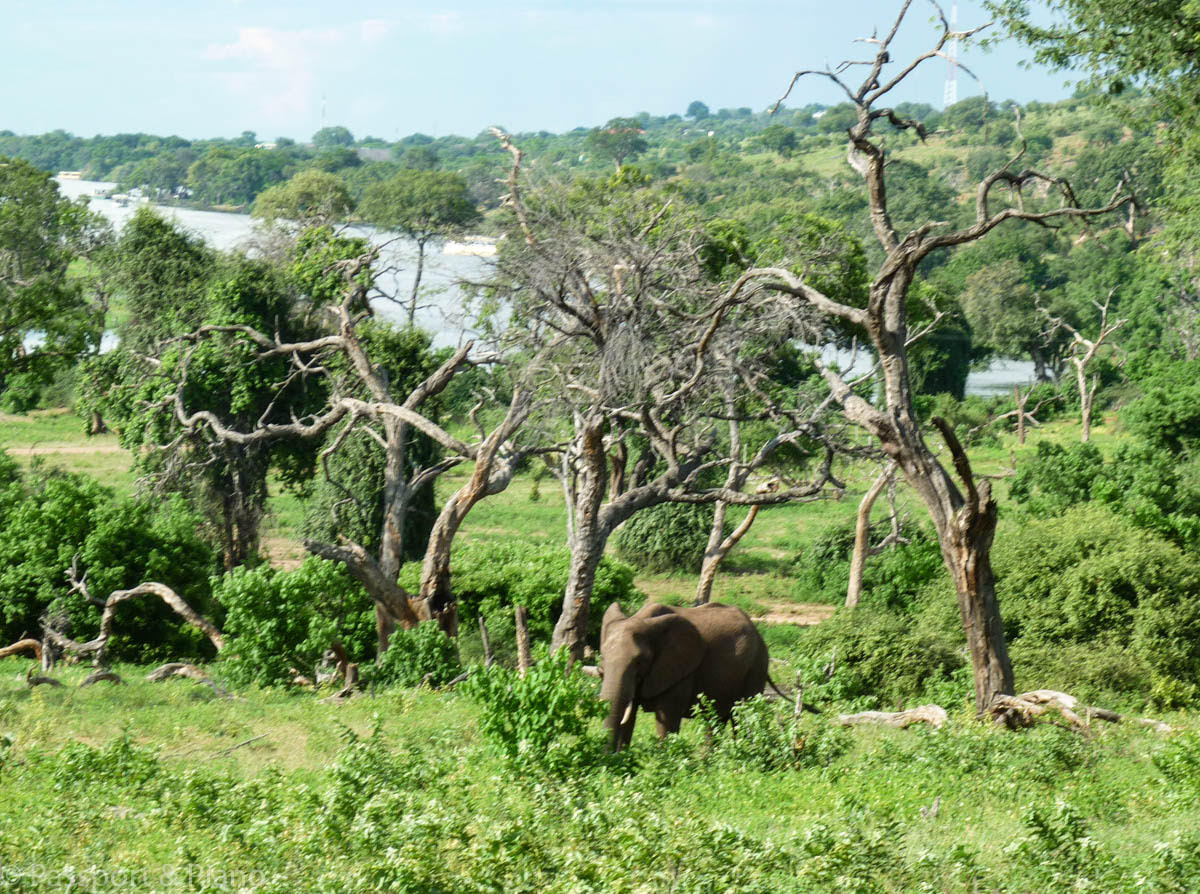 Visiting Africa? Here are some of the safe countries in Africa to visit