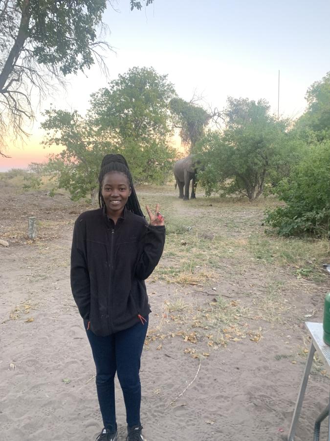 elephant at campsite in botswana