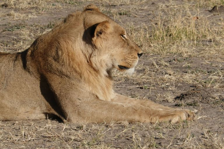 The complete guide to a safari in Chobe National park in Botswana