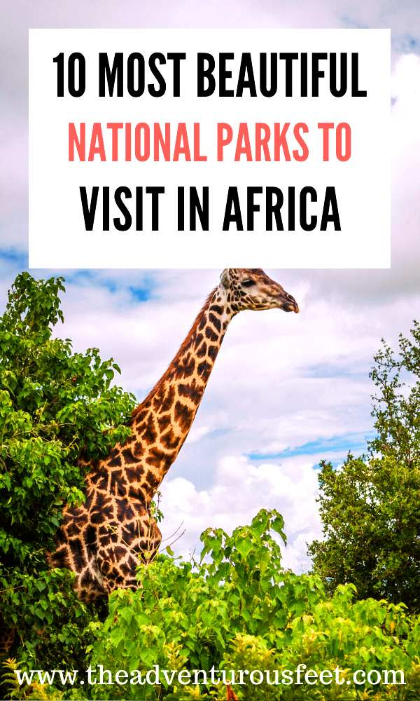 Want to go for an African safari? Here are the best national parks in Africa to consider. | Africa national parks to visit | south africa national parks | Africa nature national parks |Africa safari photography national parks |where to safari in Africa | best safaris in Africa | most beautiful game parks in Africa |Africa travel photography national parks #Africanwildlifesafari #nationalparksinafrica #bestsafariparksinafrica #theadventurousfeet