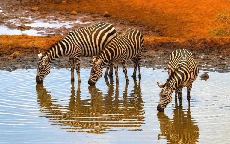 10 Best National Parks in Africa you need to visit