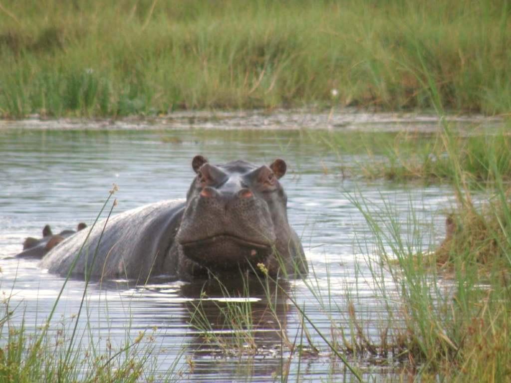 moremi game reserve- safaris in Africa