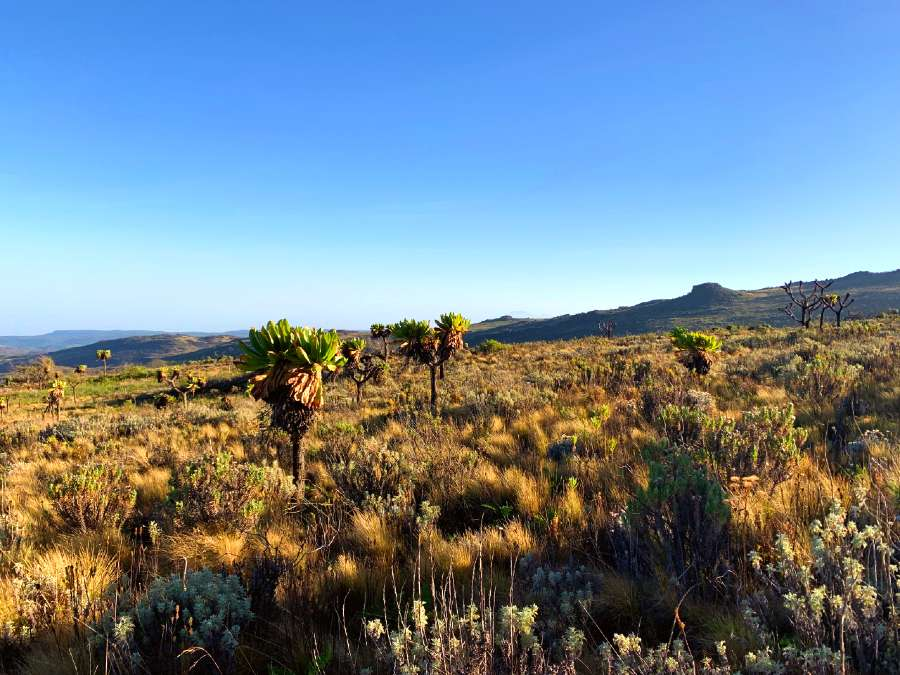 ultimate guide to climbing Mount Elgon