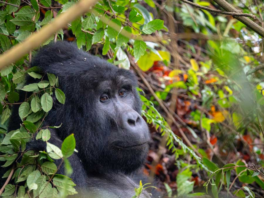Bwindi Impenetrable Forest is one of the best Africa landmarks