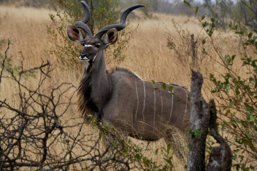 Khutse Game Reserve is another game reserve in Botswana not to miss