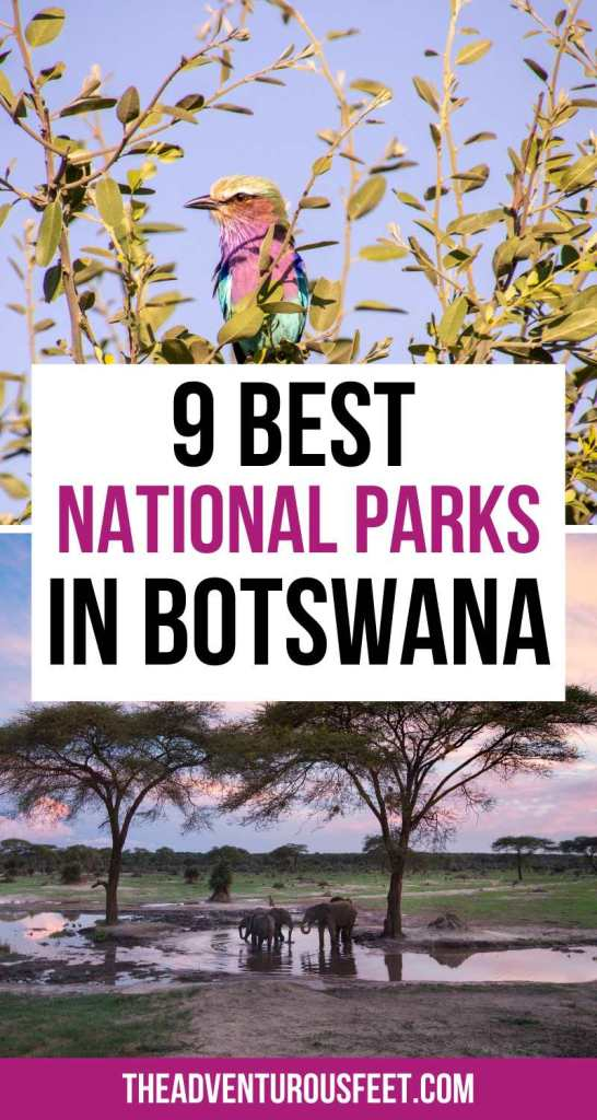 Do you want to go on a safari in Botswana but not sure where to go? Here are the best national parks in Botwana that you shouldn't miss out on. | botswana photography national parks| best Botswana national parks| best game reserves in botswana| botswana safari animals| where to go on a safari in Botswana| best game parks in Botswana| Botswana game reserves | best botswana safari places| best places to visit in Botswana| things to do in Botswana