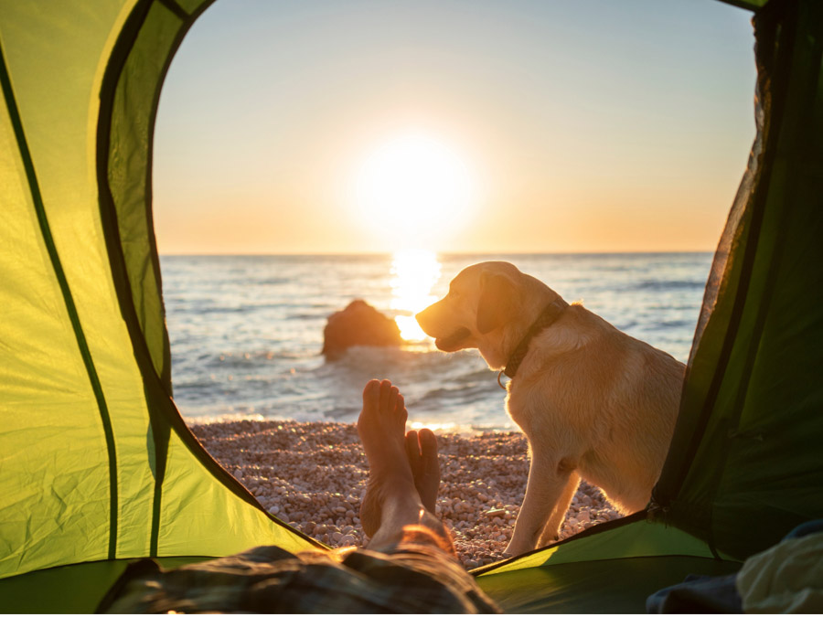 Best tips for Camping with dogs