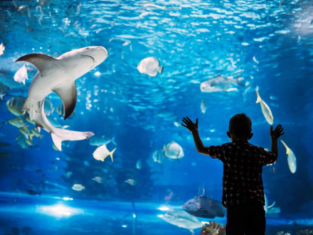 Visiting an Aquarium is one of the things to do in summer