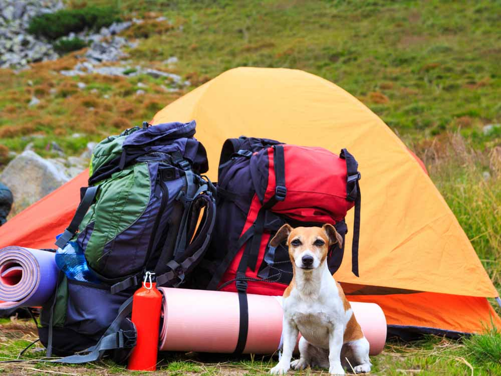 backpack Camping With a Dog
