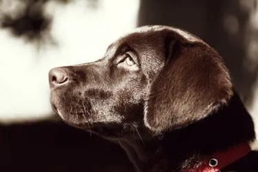 help surviving loss of a pet