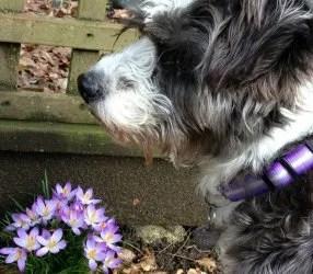 dog ulcerative colitis symptoms