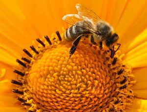 Bee Pollen and Getting Pregnant