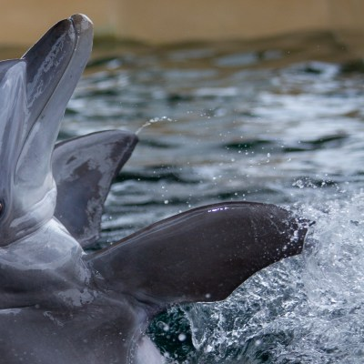 Ultimate Family Guide to Clearwater Marine Aquarium