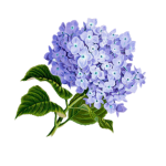 purple bulbous flower