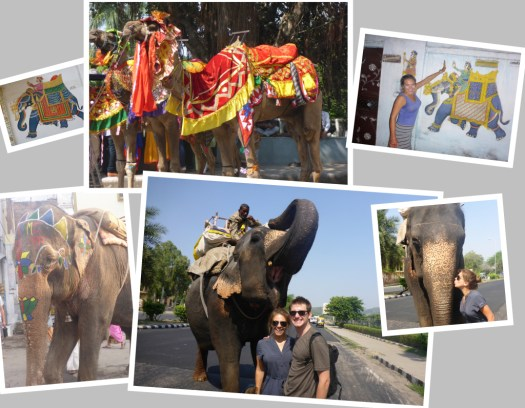 Elephants and Camels in India