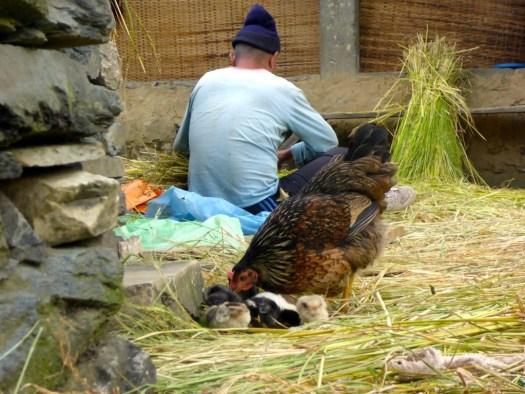 Chicks with Chicken