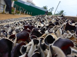 Mushroom farm - Dalat, Vietnam