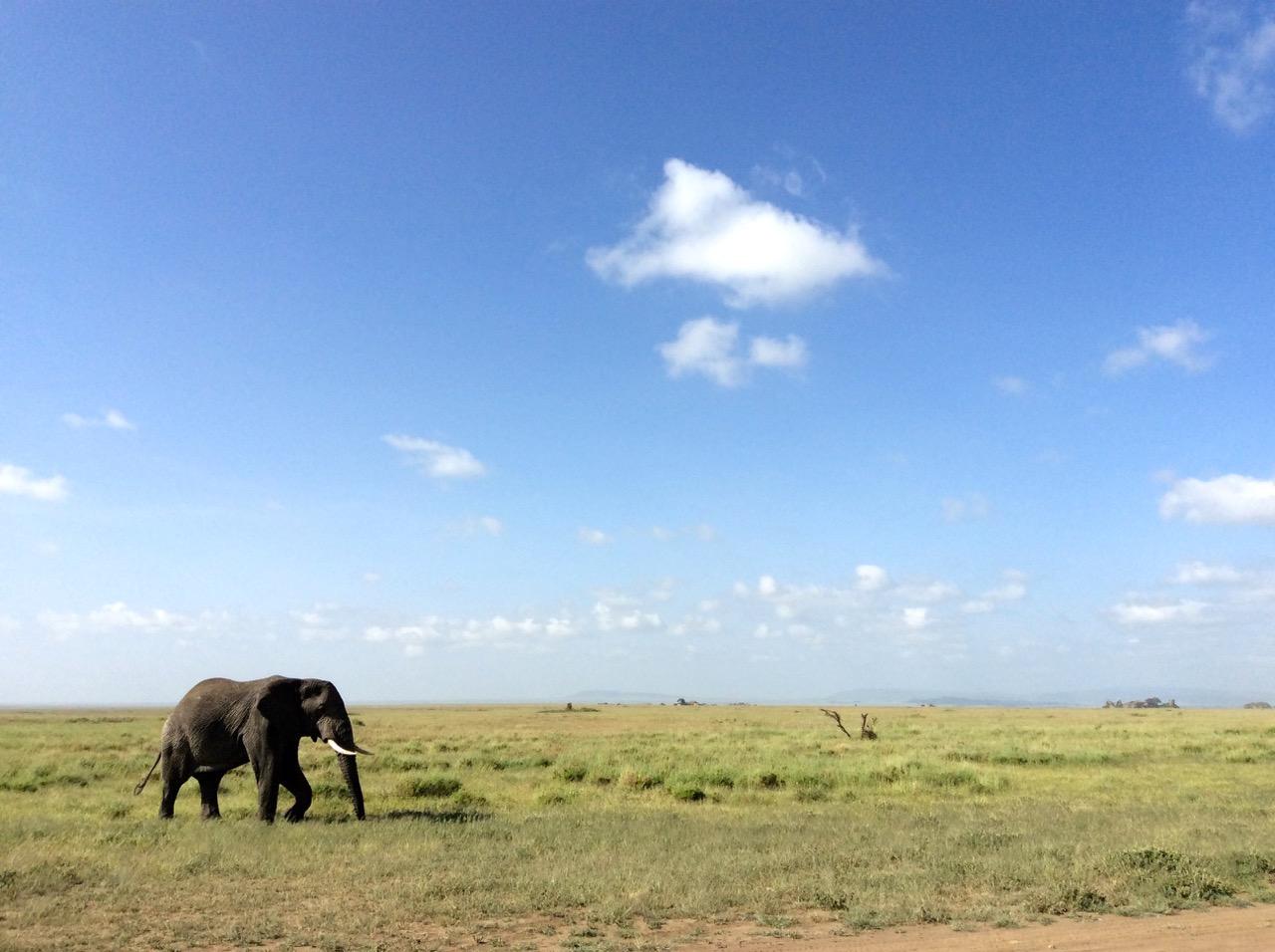 Serengeti Safari - Elephant Serengeti National Park, Tanzania