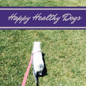 Happy Healthy Dogs