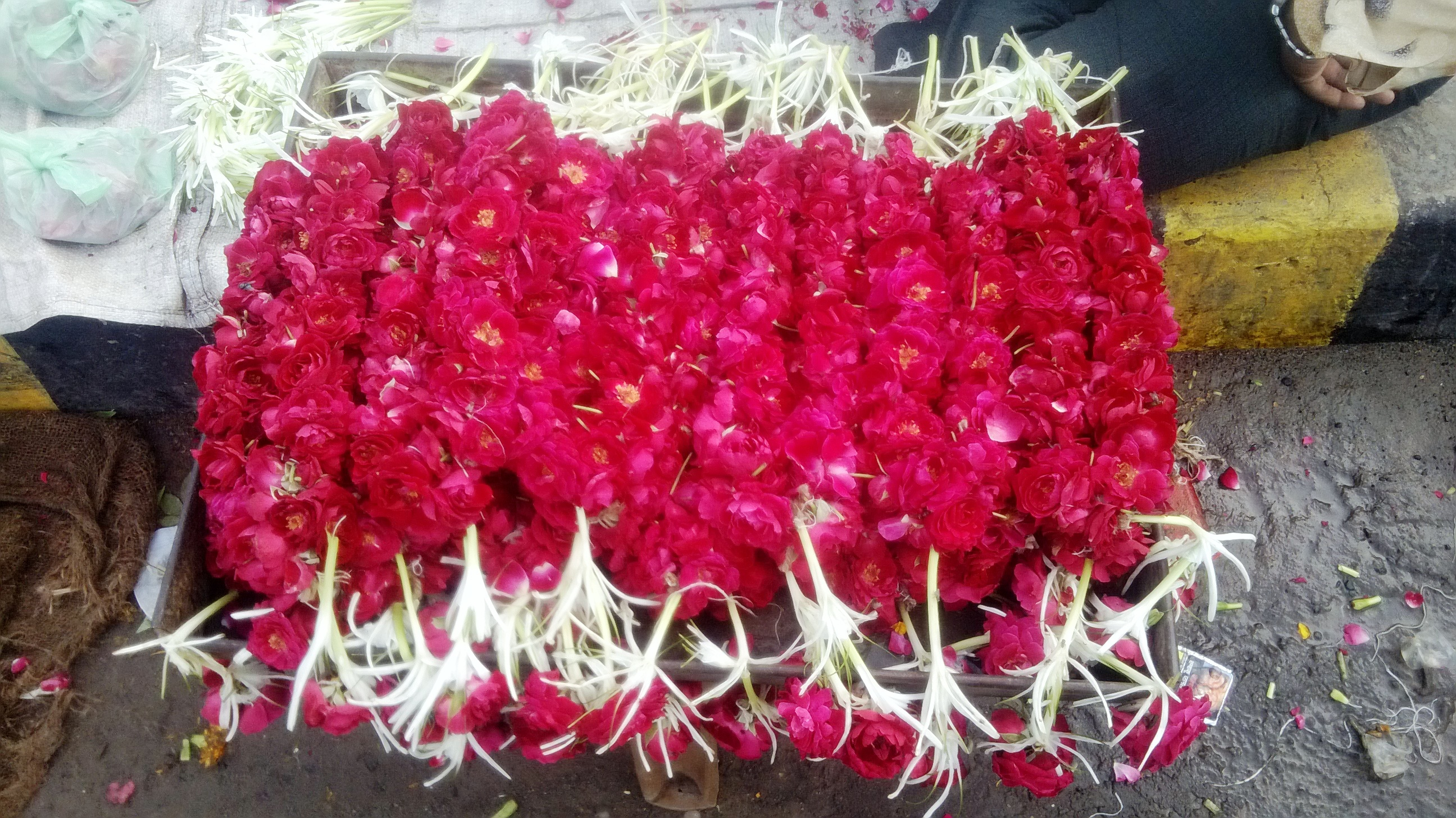 Roses for sale at the flower market on Jamalpur Bridge, Ahmedabad
