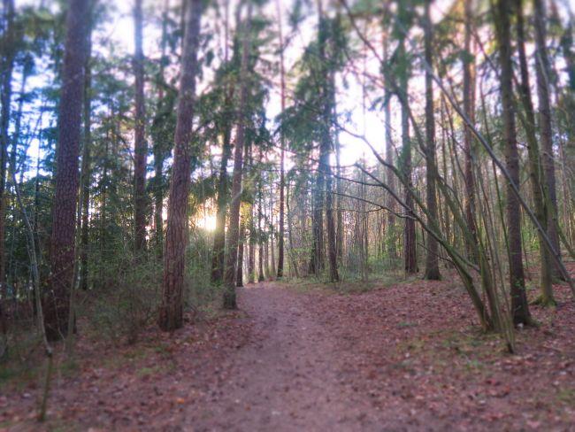Noen ganger trenger man ikke mer enn en skog, en minigrill og en god venninne.