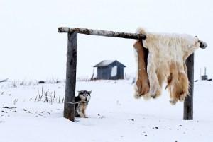 Why the Alaska Teacher is afraid of Polar Bears