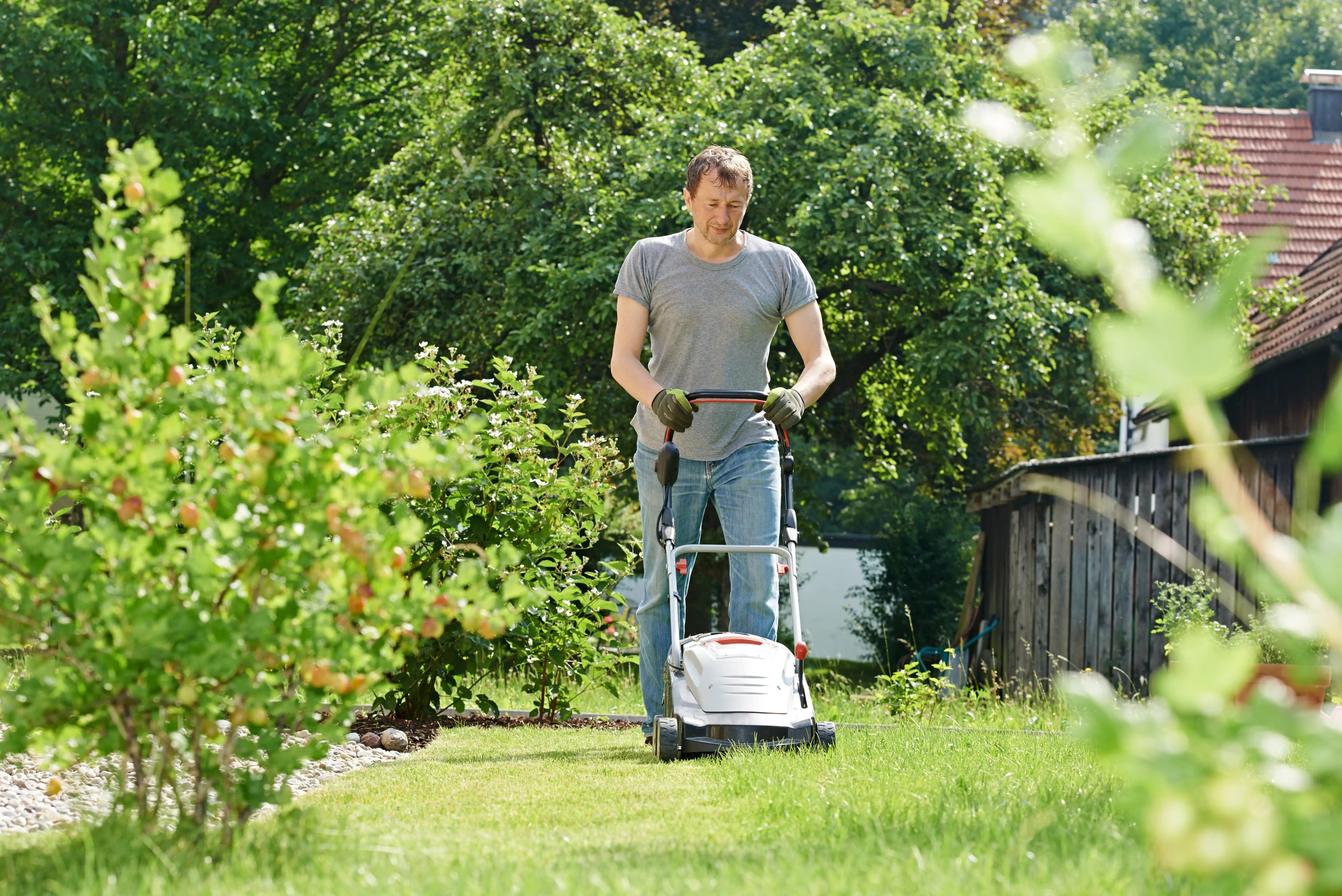 mowing grass with electric lawn mowrer in backyard