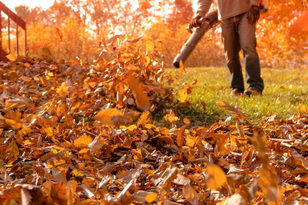 blowing huge pile of autumn leaves with back pack blower