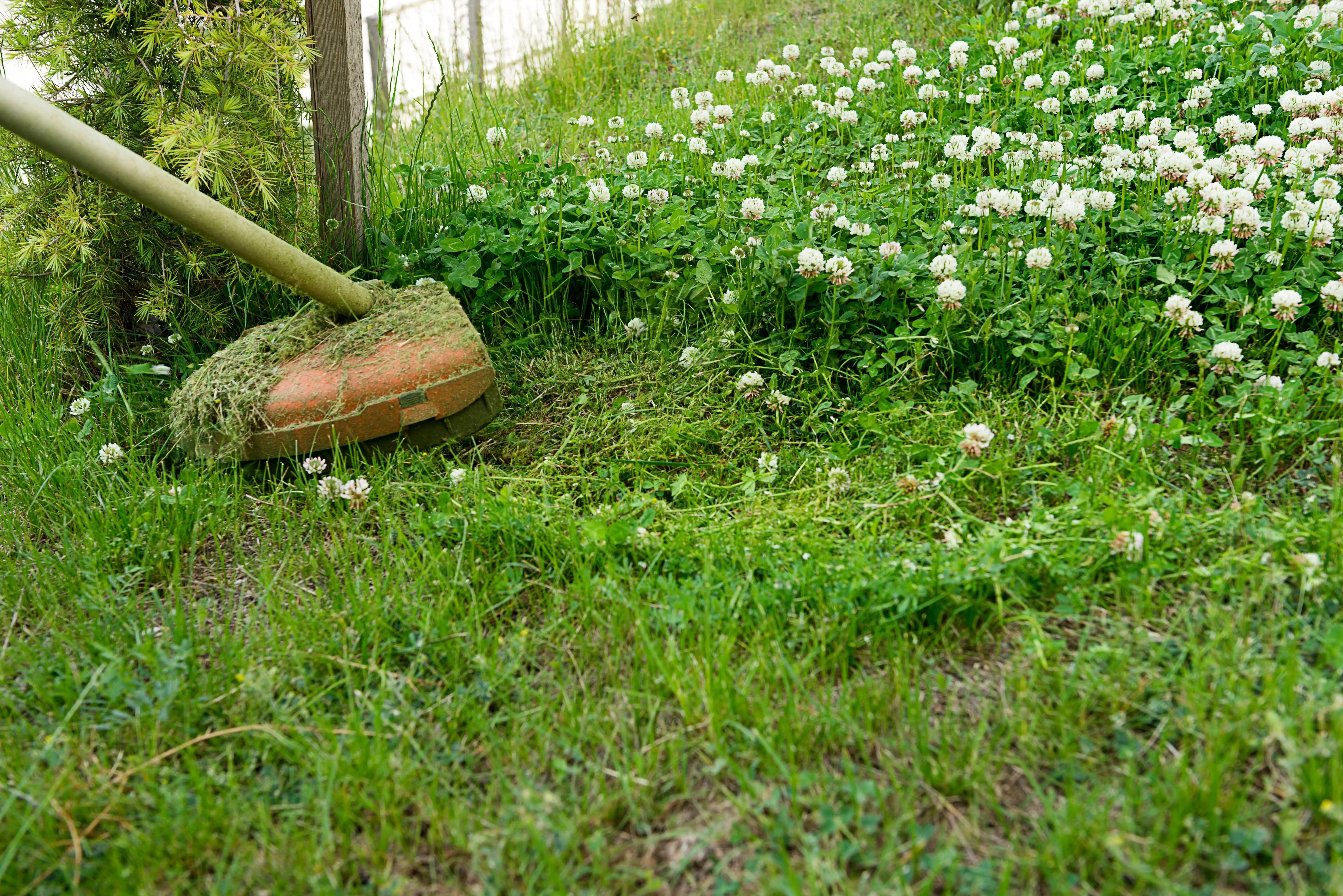 string trimmer cutting along fence line