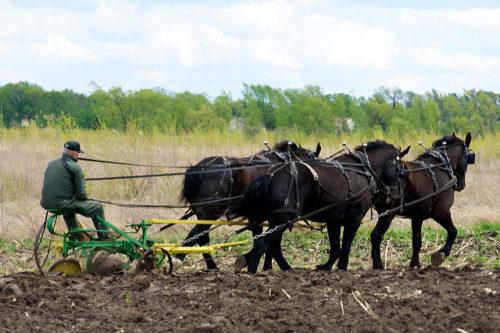 Horse Drawn Plow