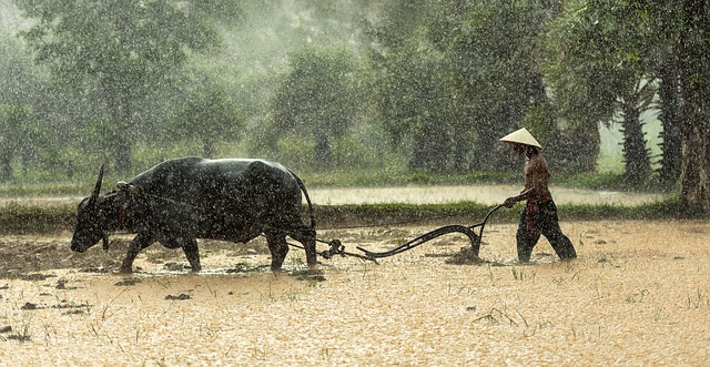 Convincing online donors to give again can be like plowing in the rain.