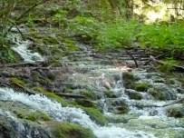 Bubbling streams