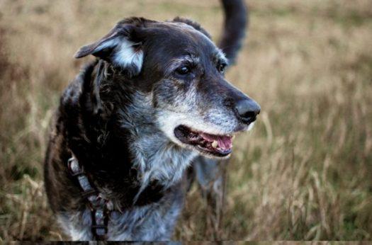 wise-dog