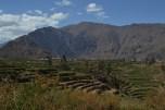 Pre-Incan terracing