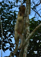 Anothet monkey