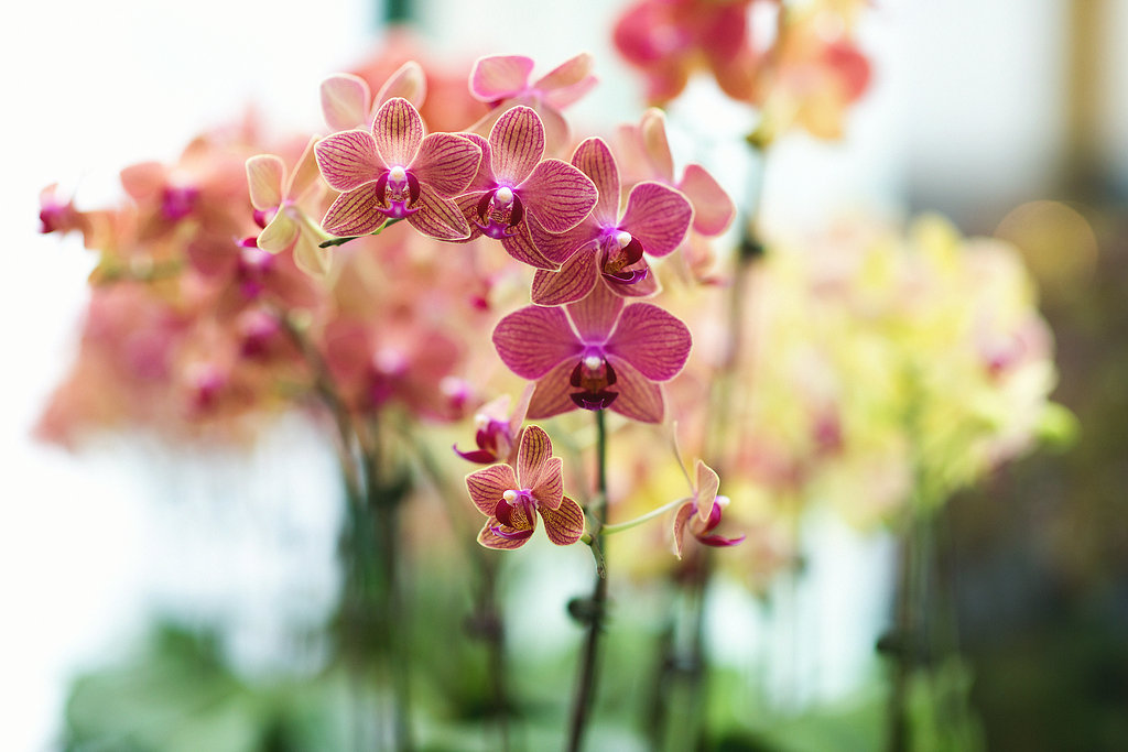 Orchids at The Majestic Hotel