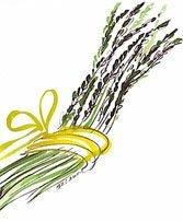 wild asparagus, italia, italy, La Rosetta, Rome, Maurizio Lustrati